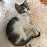 Котенок девочка, Краснодар