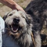 Пёс Хуан, Краснодар