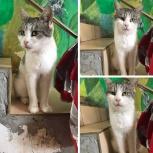 Кошка булочка, Краснодар