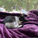 Черно-белый котенок, Краснодар