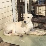 Белый щенок, Краснодар