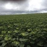 Предприятие сельхозназначения 5000 Га, Краснодар