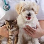 Ветеринарные услуги, Краснодар