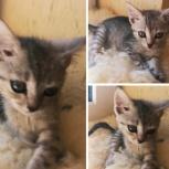 Котёнок девочка, Краснодар