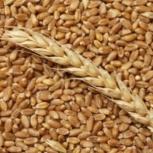 Пшеница, зерно продаем франко-вагон FCA, Краснодар