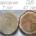 Деревья павловния Краснодар, Краснодар