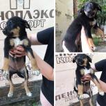 Черный щенок 2 месяца, Краснодар