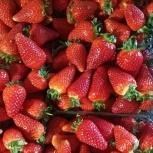 Теплицы по выращиванию клубники, Краснодар