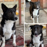 Собака Аннушка, Краснодар